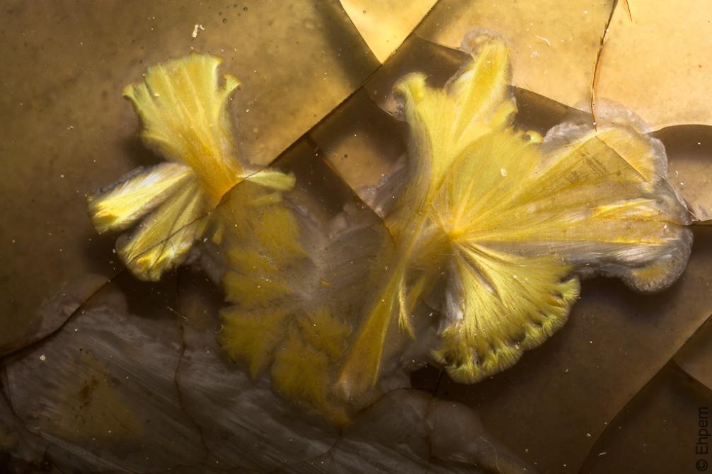 Plate crystal macro