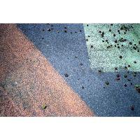 Street Figs